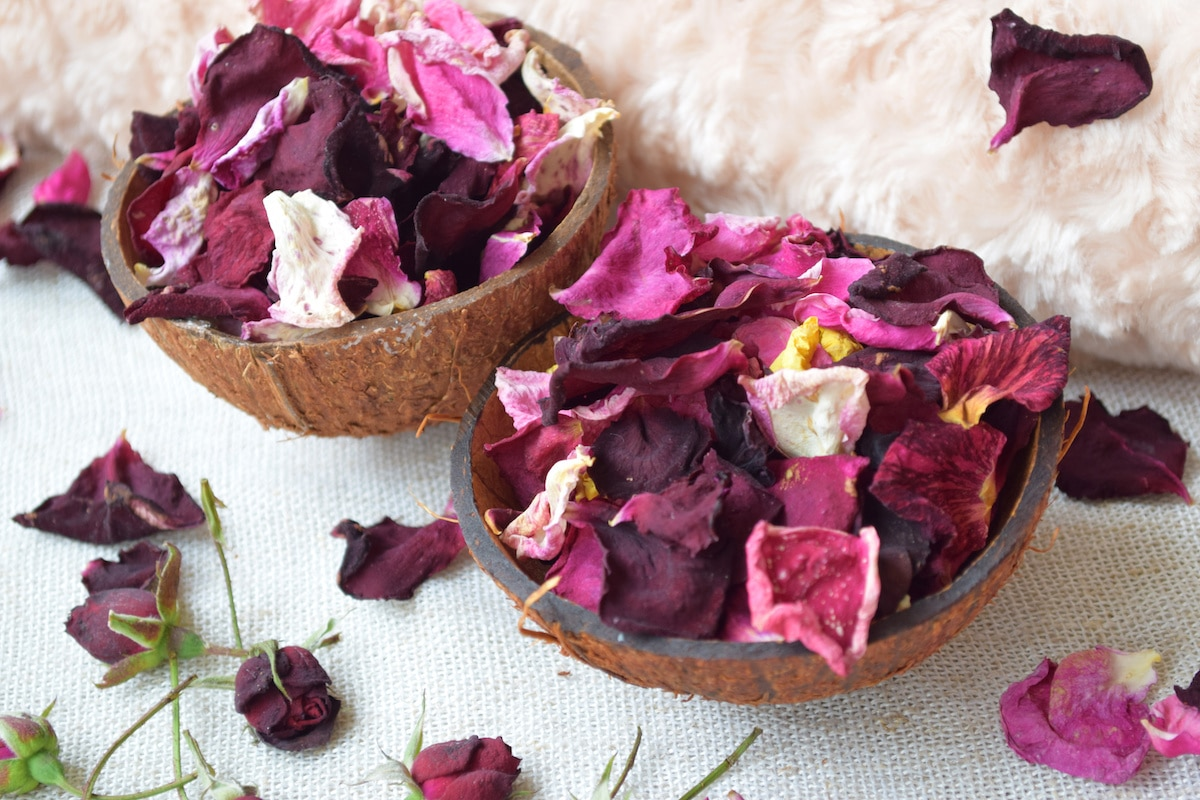 Rose blossom, Petals in coconut bowl, Pink flowers, Beauty background