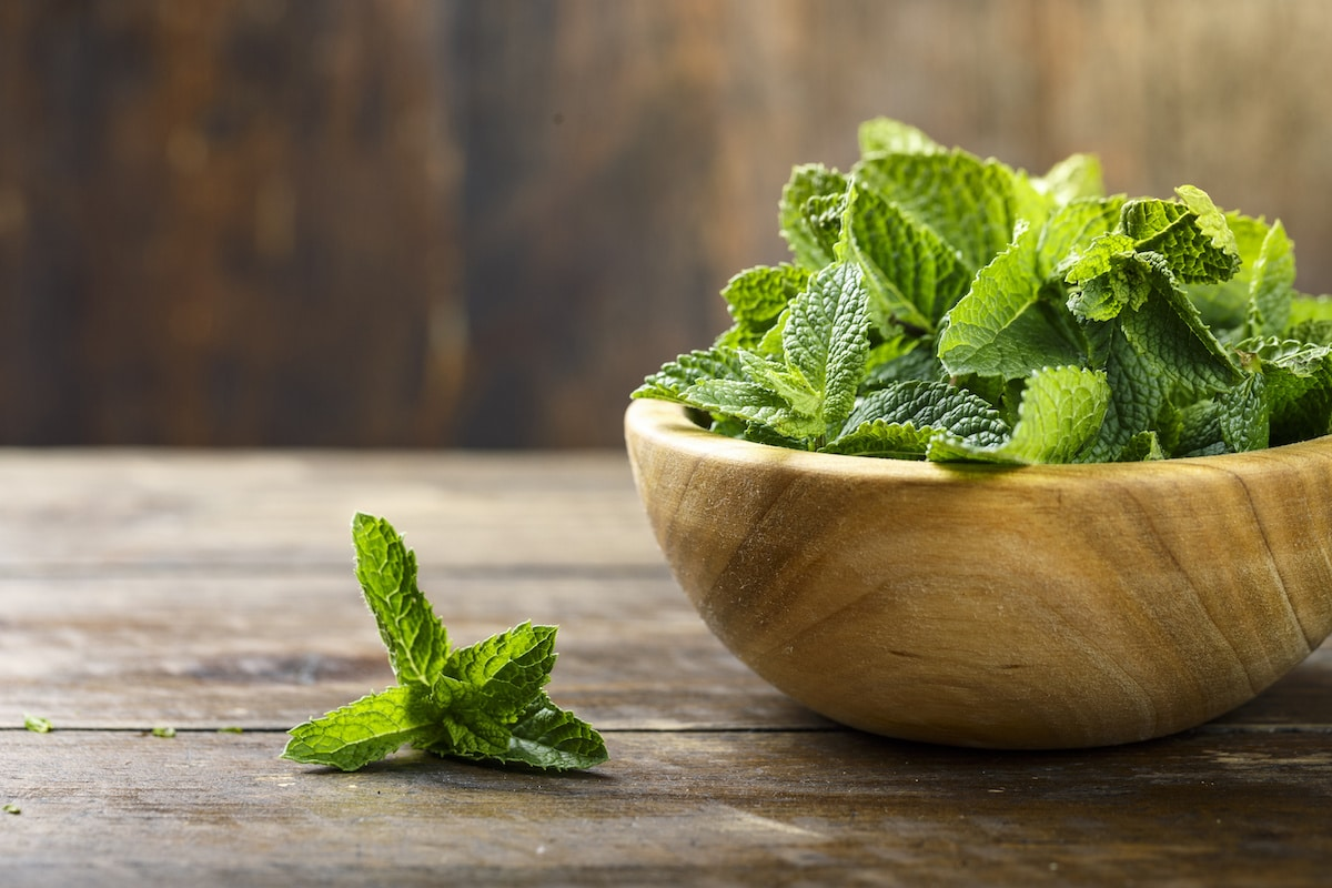 Fresh mint in a plate on a wooden background. decor for refreshing drinks and desserts. place for text